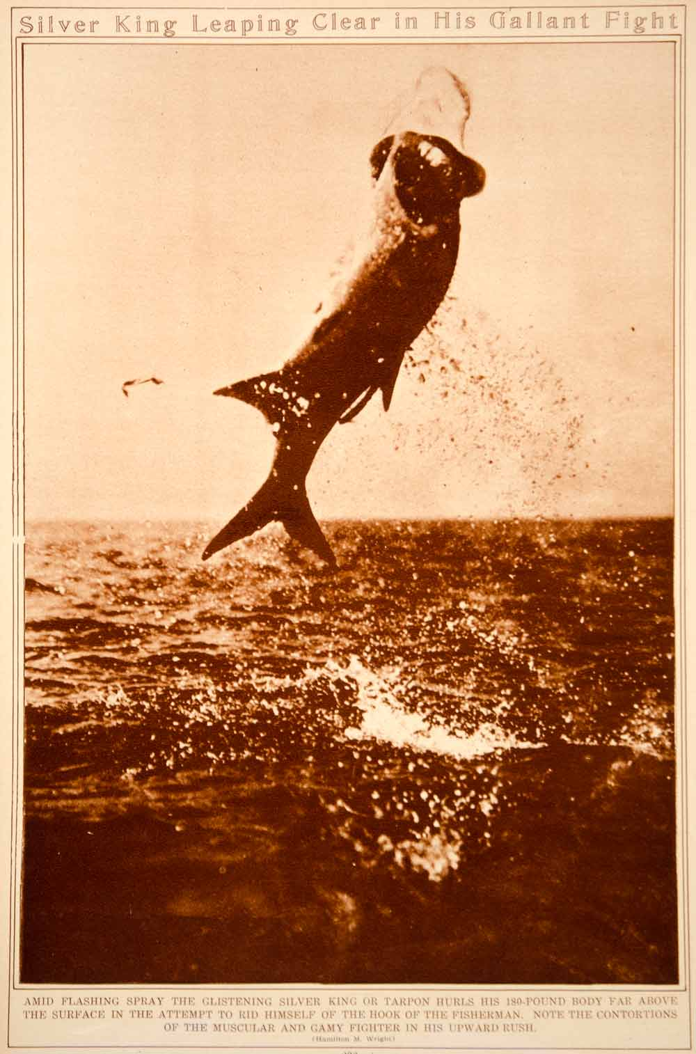 1923 Rotogravure Atlantic Tarpon Silver King Saltwater Game Fish Fishing Hooked
