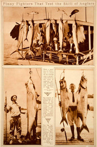 1923 Rotogravure Big Game Fishing Florida Tarpon Mackerel Amberjack Grouper Fish