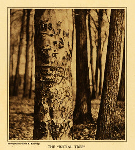 1922 Rotogravure Initial Tree Elsie Kittredge Spring Bark Beech Forest TMM1