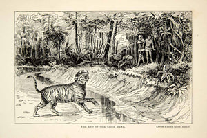 1910 Wood Engraving East Indies Tiger Hunting Hunter Gun William T Hornaday TYJ1