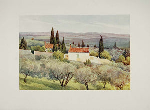 1905 Print Country Landscape Olive Grove Nimes France - ORIGINAL VN1