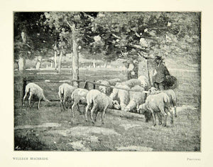 1897 Print William MacBride Pastoral Sheep Herd Scotland Farm Manger XAAA7