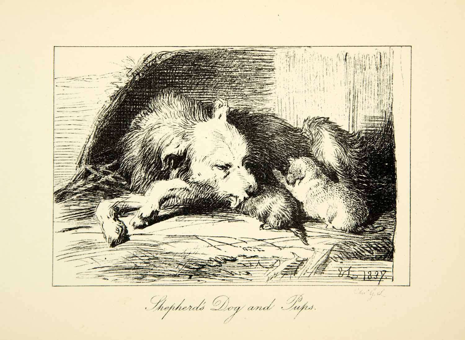1883 Photolithograph Shepherd's Dog Puppies Sir Edwin Landseer C G Lewis XACA6
