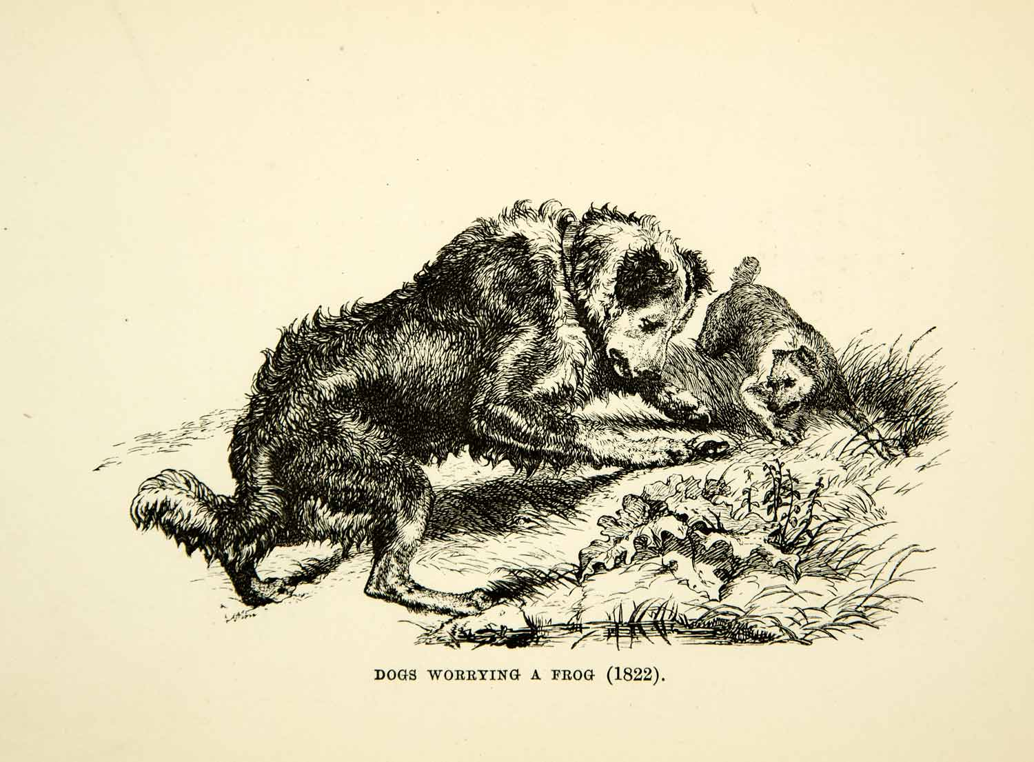 1883 Photolithograph Dogs Worrying Frog Sir Edwin Landseer C. G. Lewis XACA6