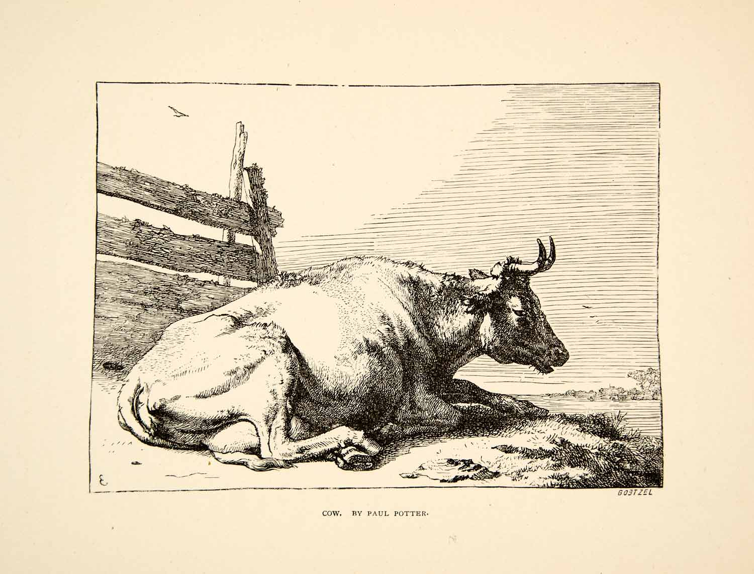 1874 Print Cow Animal Bovine Cattle Paul Potter Laying Down Horns Fence XADA6