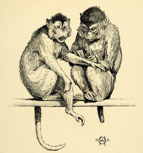 1920 Wood Engraving O. A. Hermanson Art Monkeys Grooming Jungle Animals XDA7