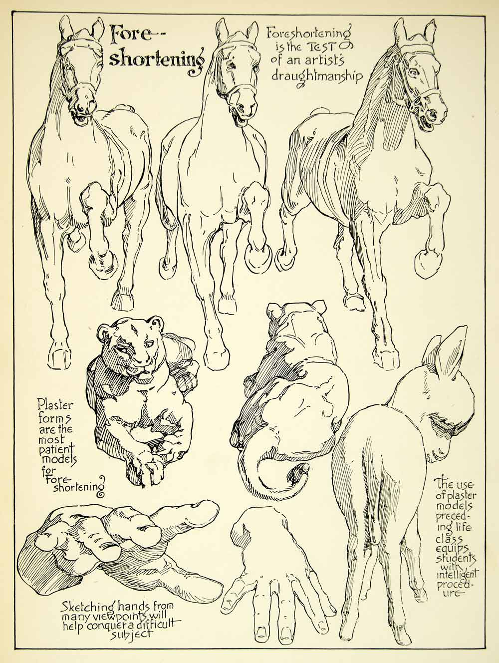 1938 Print Foreshortening Horse Cougar Hand Drawing Guide Sketch Baby Donkey Art