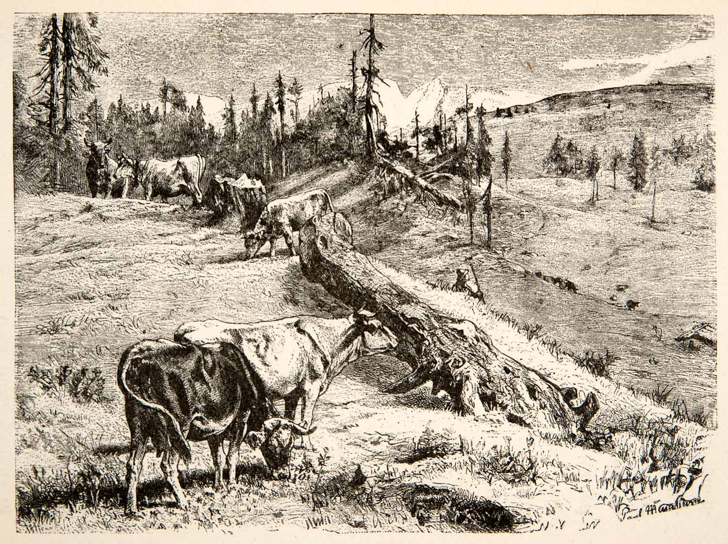 1881 Wood Engraving Cattle Graze Mountain Pasture Switzerland Landscape XEI4