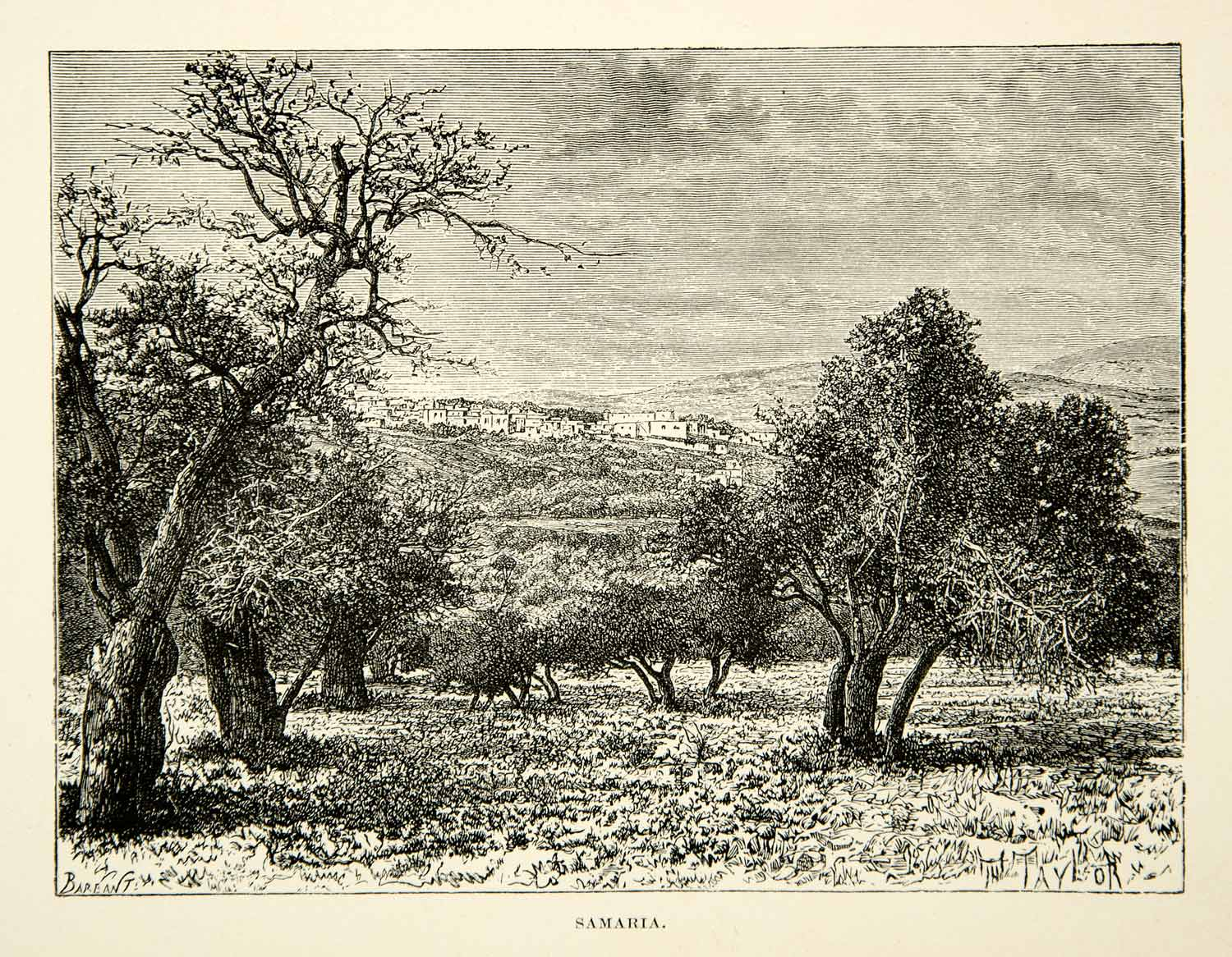 1891 Wood Engraving Samaria Landscape Biblical Trees Middle East Field XGFD1