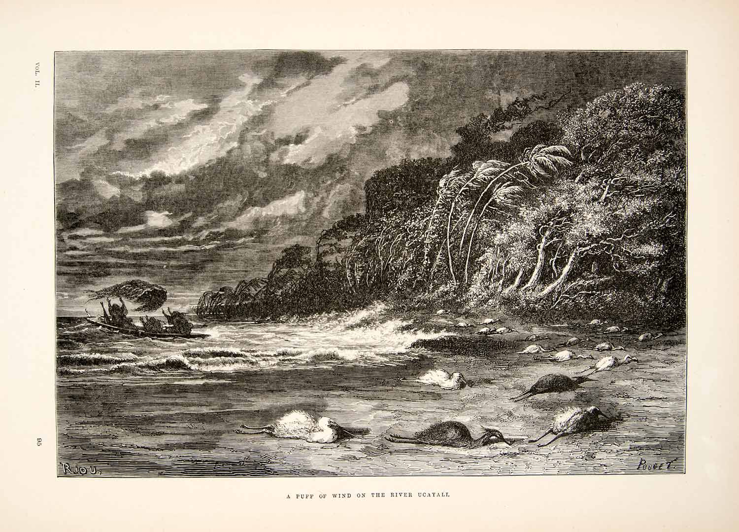 1875 Wood Engraving Wind Storm Birds Ucayali River Rainforest South XGHC1