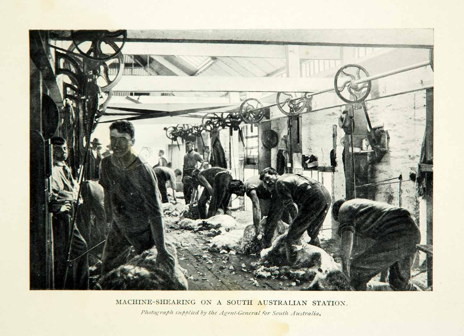 1910 Print Machine-Shearing South Australian Industrial Agricultural XGHD8