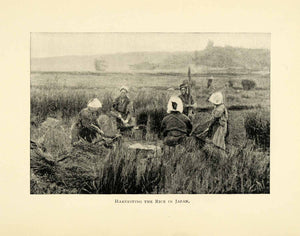 1898 Print Rice Harvest Japan Japanese Harvesters Agriculture Crops Farming XGL7