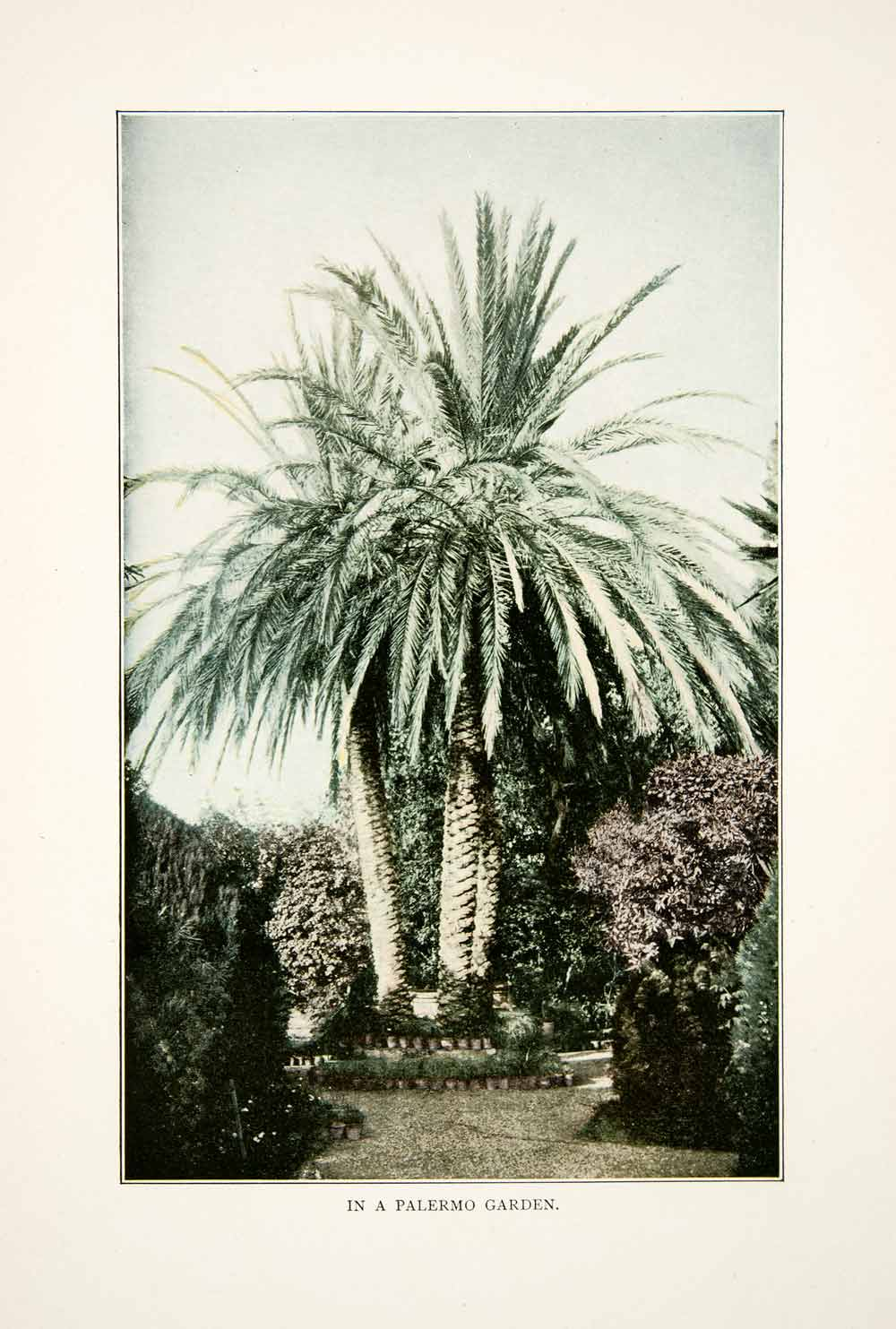 1908 Color Print Palermo Italy Botanical Gardens Palm Trees Floral Flowers XGNB9