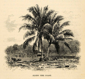 1888 Wood Engraving Along Coast Palm Tree Quito Ecuador River Shore Boat XGU6