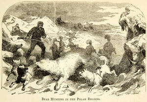 1873 Wood Engraving Polar Bear Hunt North Pole Exploration Expedition XGXC4