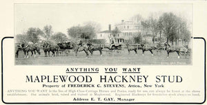 1903 Ad Maplewood Hackney Stud Carriage Horses Ponies Equestrian Animal YCL2