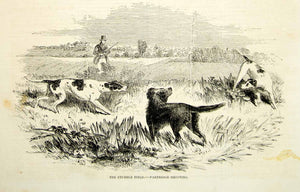 1852 Wood Engraving Art Stubble Field Partridge Shooting Hunting Dogs Pets YGP2
