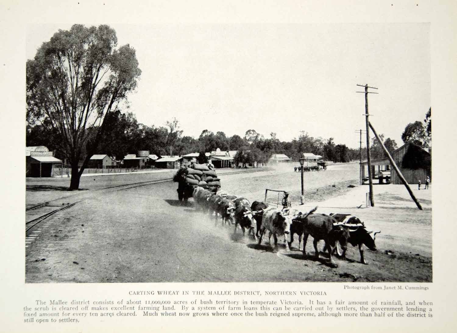 1916 Print Mallee District Northern Victoria Australia Wheat Cart Historic YNG1