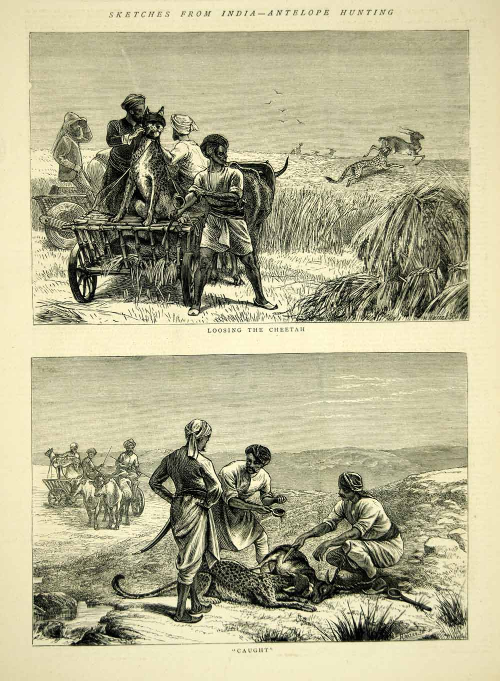 1872 Wood Engraving Art Antelope Cheetah Hunting India Asia Animals YTG4