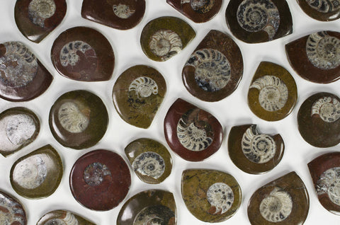 Polished Ammonite Buttons