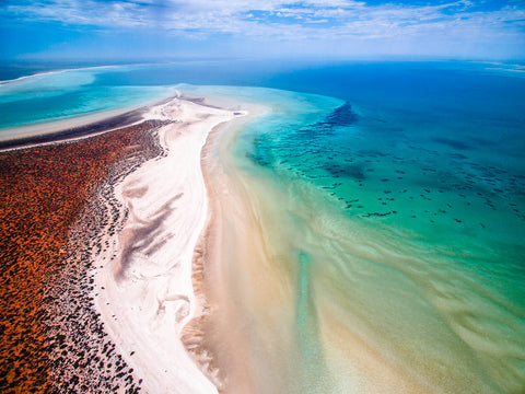 SW0019 - Shark Bay - Salty Wings