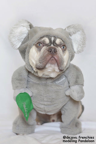 Pandaloon Limited Edition Walking Koala Pet Costume AS SEEN ON SHARK TANK