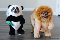 Pandaloon Walking Lion with Mane Dog and Pet Costume - Pandaloon