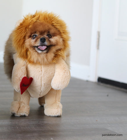Pandaloon Walking Lion with Mane Dog and Pet Costume