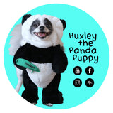Huxley the Panda Puppy Popsocket