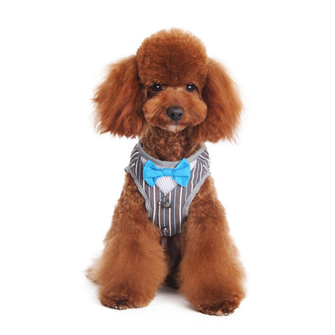 Dapper Blue Bowtie and Pinstripe Vest Step In Harness