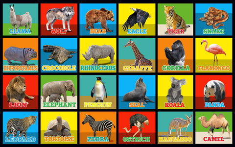 Animal Picture Squares Rug 24