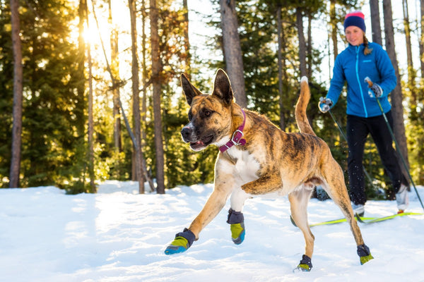 Redesigned - Polar Trex Winter Dog Boots