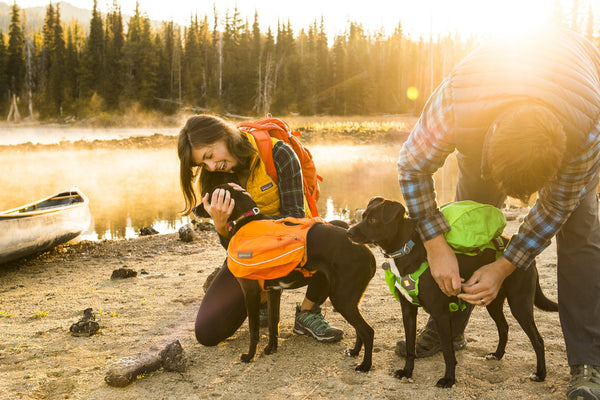 NEW Ruffwear Approach Pack