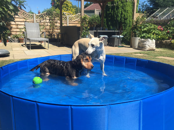 Dog Paddling/Splash Pool (good for Ducks and Alpacas too!)
