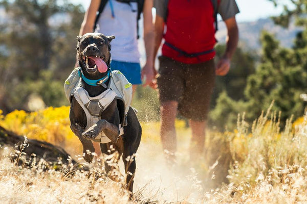 Ruffwear Harness Core Cooler - Cooling Chest Panel