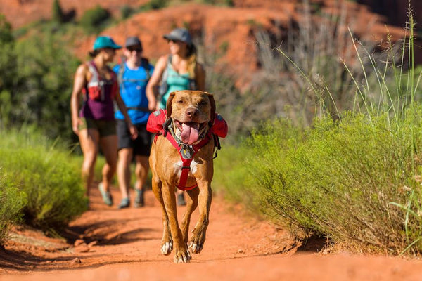 New Ruffwear Singletrack Pack