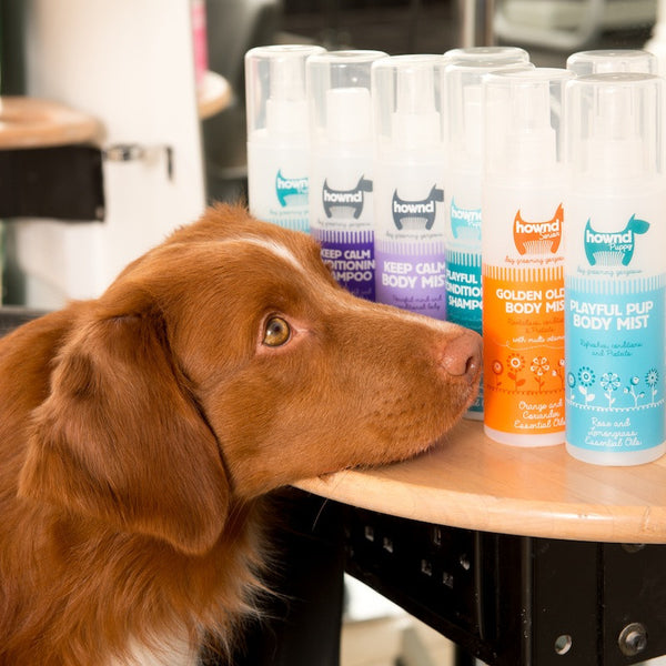 Grooming - Got An Itch? Conditioning Shampoo