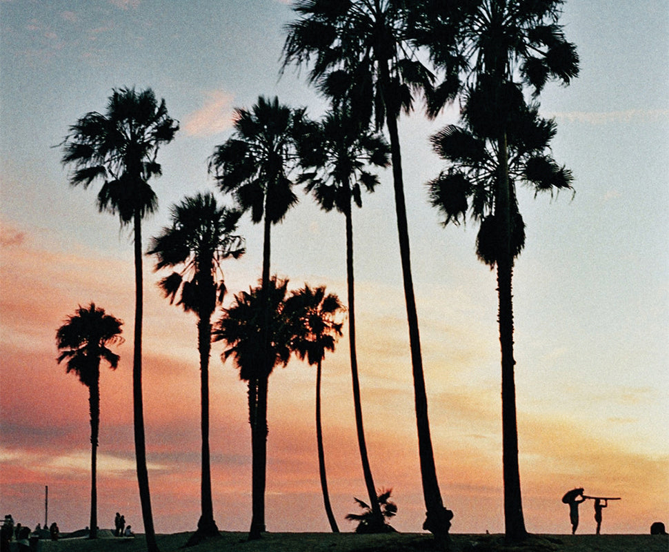 GUIDE TO VENICE BEACH