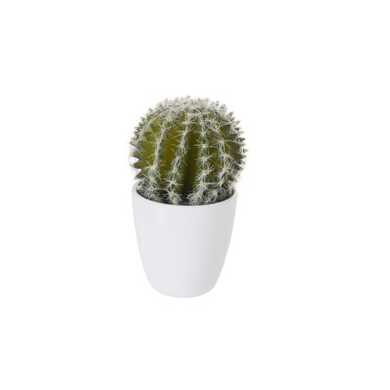 kleine nep cactus in pot