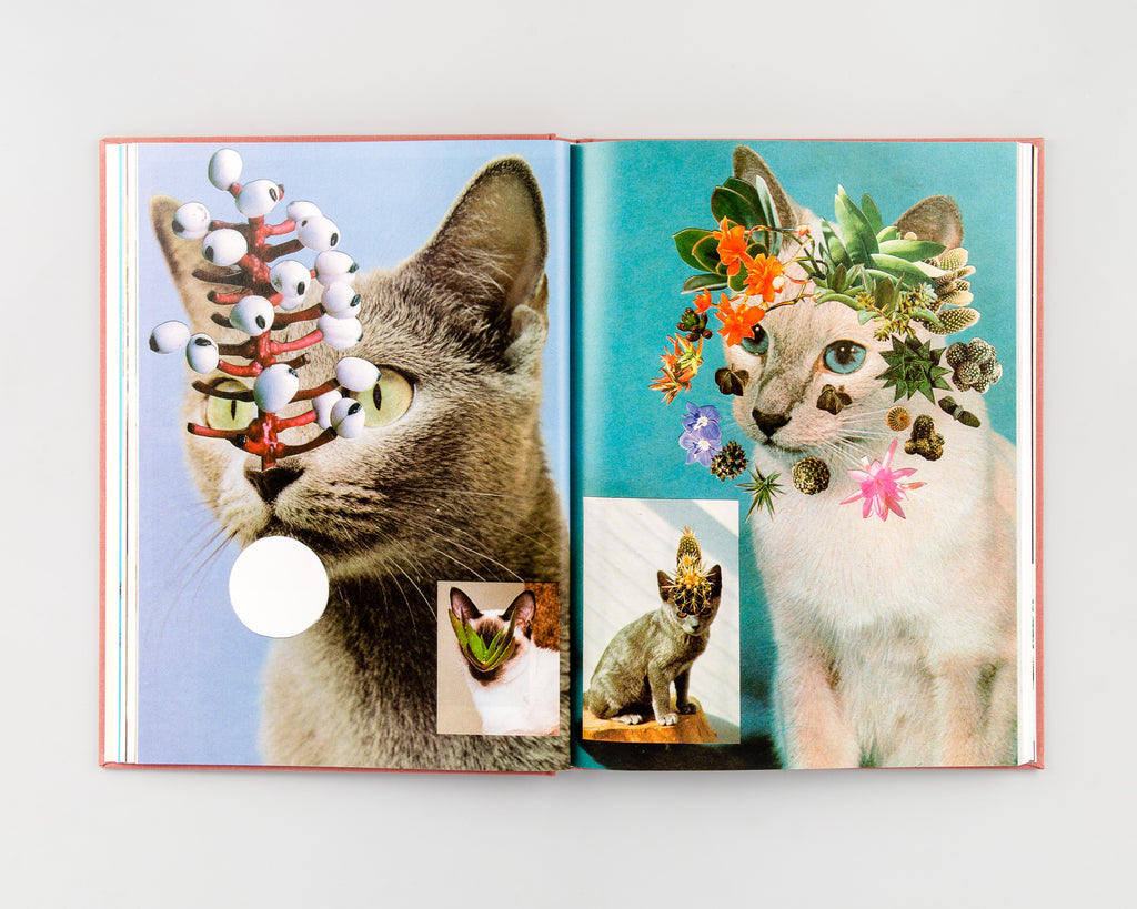 Cats & Plants by Stephen Eichhorn - 7