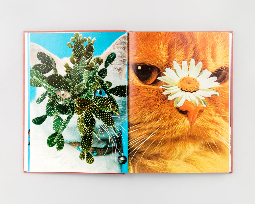 Cats & Plants by Stephen Eichhorn - 3