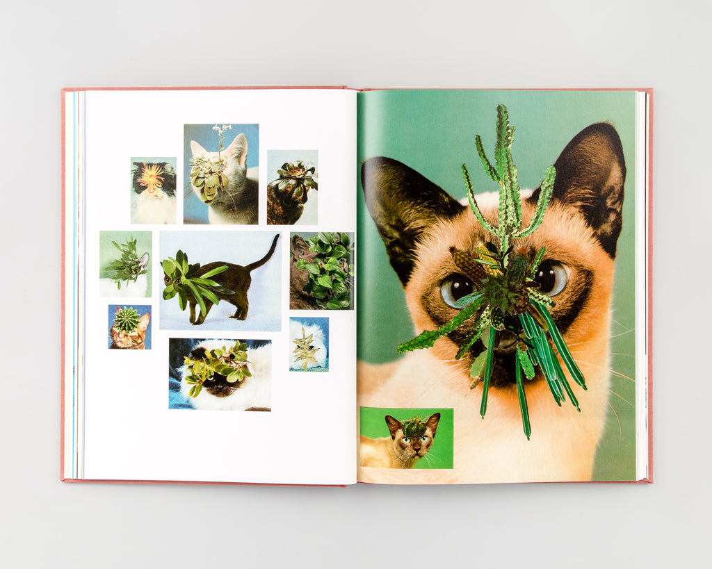 Cats & Plants by Stephen Eichhorn - 8