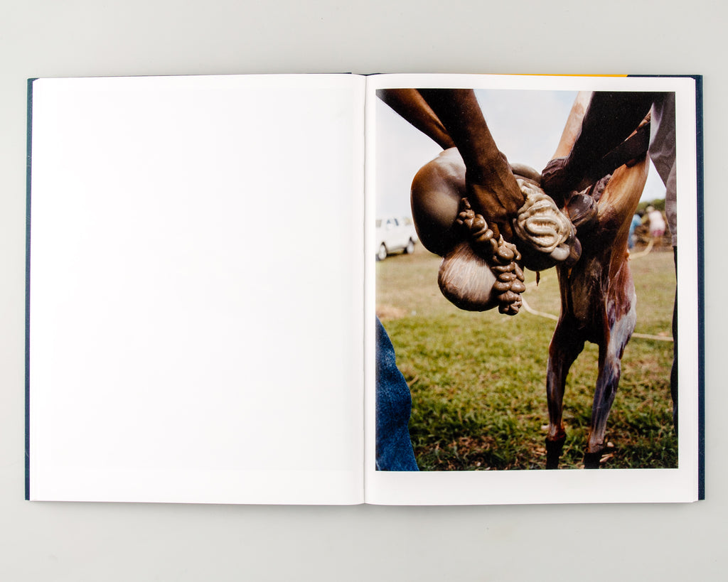 Let the Sun Beheaded Be by Gregory Halpern - 6