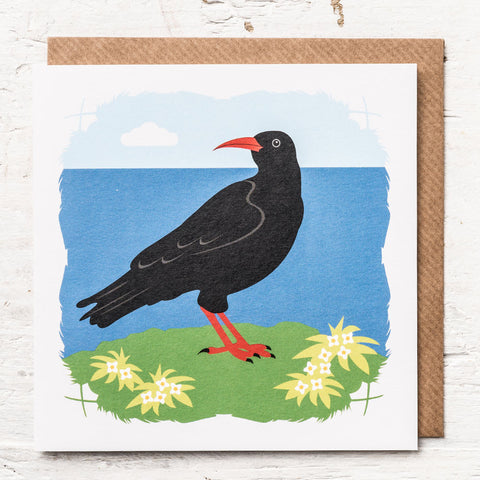 Chough Greeting Card
