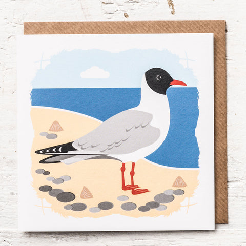 Black-headed Gull Greeting Card