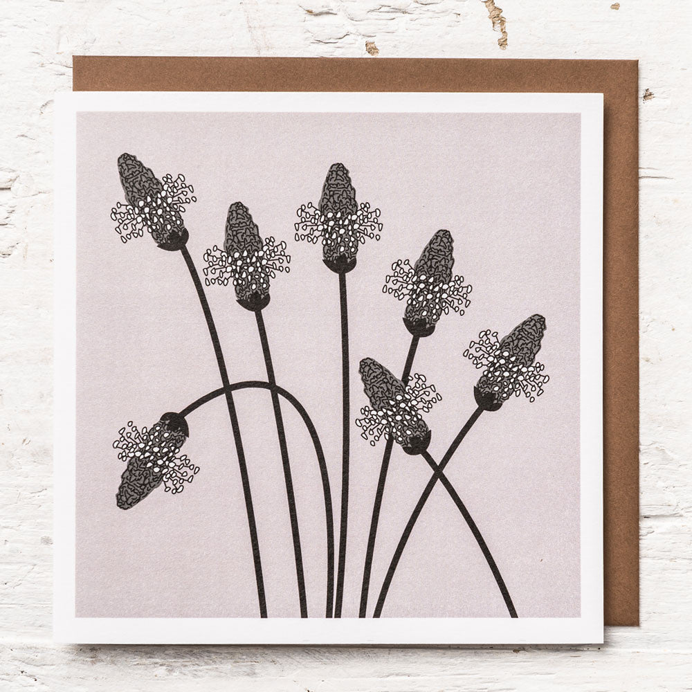 Ribwort Plantain Greeting Card