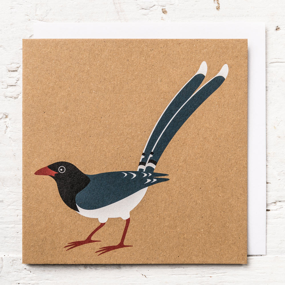 Mr Red-billed Blue Magpie