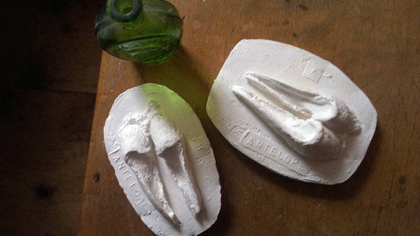 antelope animal tracks /plaster cast -home- prettydreamer - 6