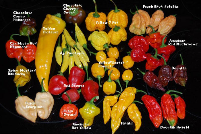 Scoville heat units (SHU)