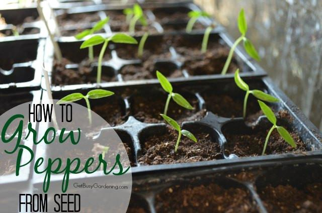 How To Grow Hot Pepper Seeds